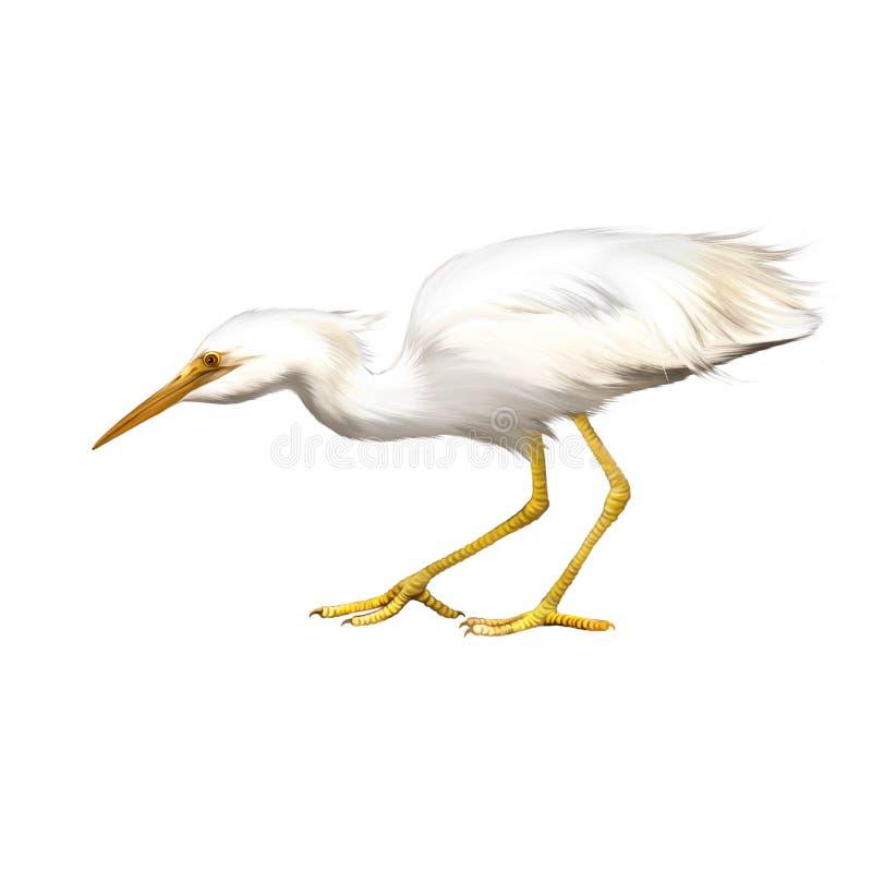 伟大的白色白鹭,晨曲的Ardea 库存例证