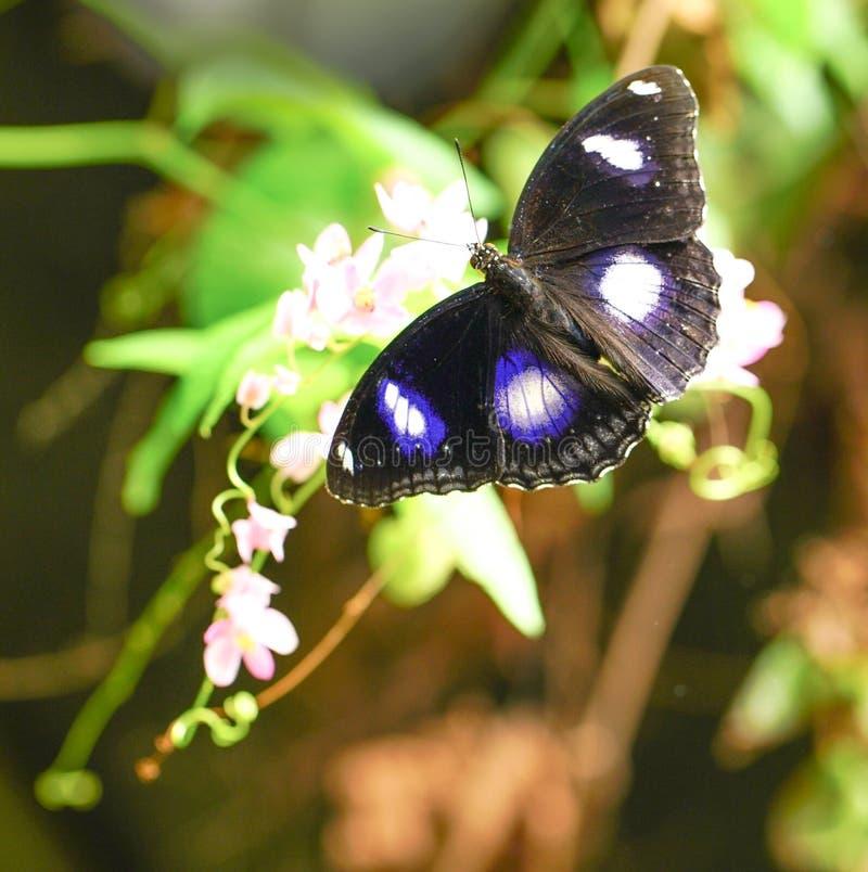 Download 伟大的蛋蝇蝴蝶在庭院里 库存图片. 图片 包括有 夏天, 春天, 环境, 昆虫, 空间, 鸡蛋, 蝴蝶, 开放 - 72353109