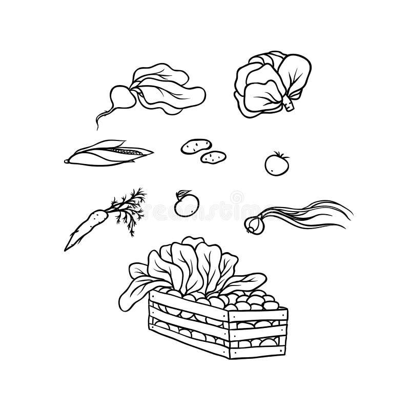 传染媒介剪影集合菜文化 在箱子收集的农业庄稼菜 被隔绝的色的等高 皇族释放例证