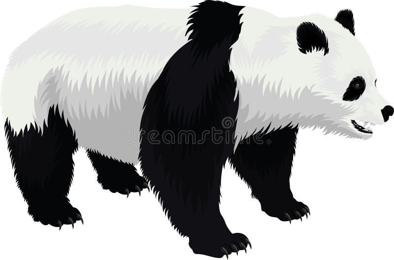传染媒介在白色隔绝的大熊猫熊 向量例证
