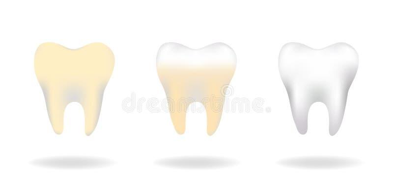 传染媒介套三颗槽牙牙关心,干净的牙,保持健康和强,防止蛀牙、概念口头教育的和m 库存例证