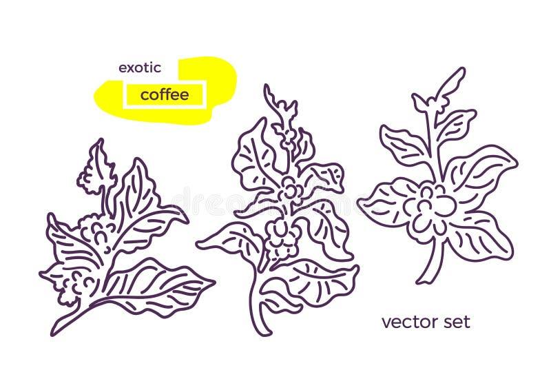 传染媒介套咖啡分支 库存例证