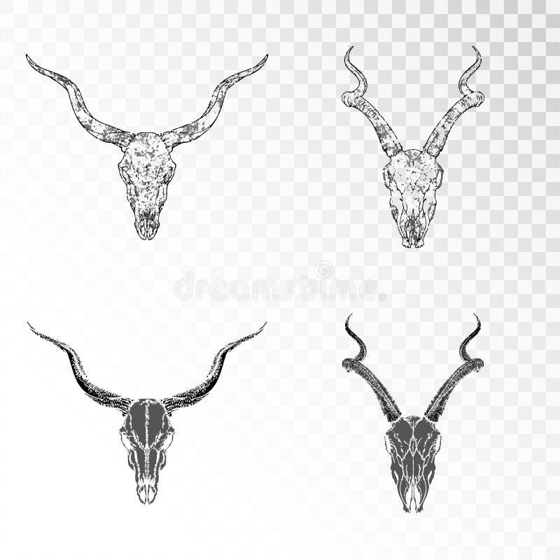 传染媒介套在透明背景的手拉的头骨羚羊 黑剪影和等高与难看的东西纹理 皇族释放例证