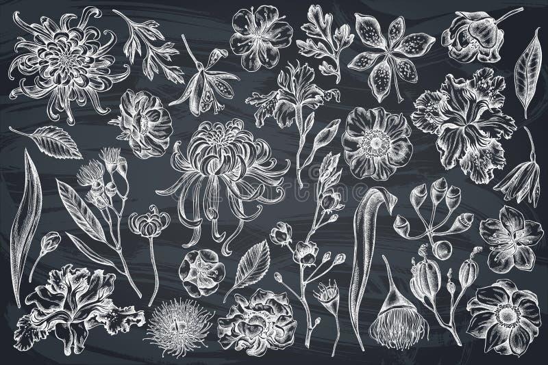 传染媒介套手拉的白垩日本菊花,黑莓百合,玉树花,银莲花属,虹膜japonica 向量例证