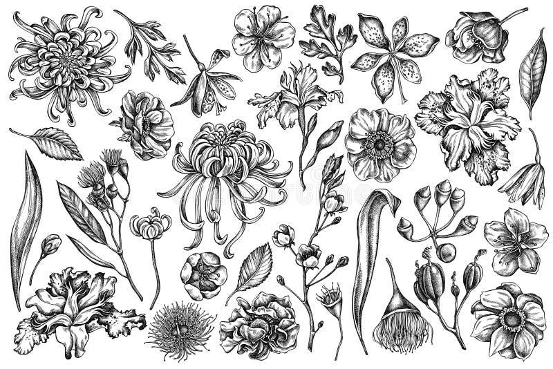 传染媒介套手拉的黑白日本菊花,黑莓百合,玉树花,银莲花属,虹膜 皇族释放例证