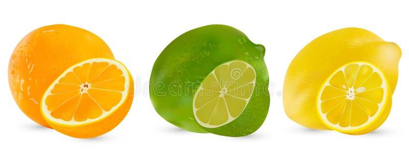 传染媒介套柑桔石灰、桔子和柠檬 在白色背景的被隔绝的被切的柑橘 柑橘一半 向量例证