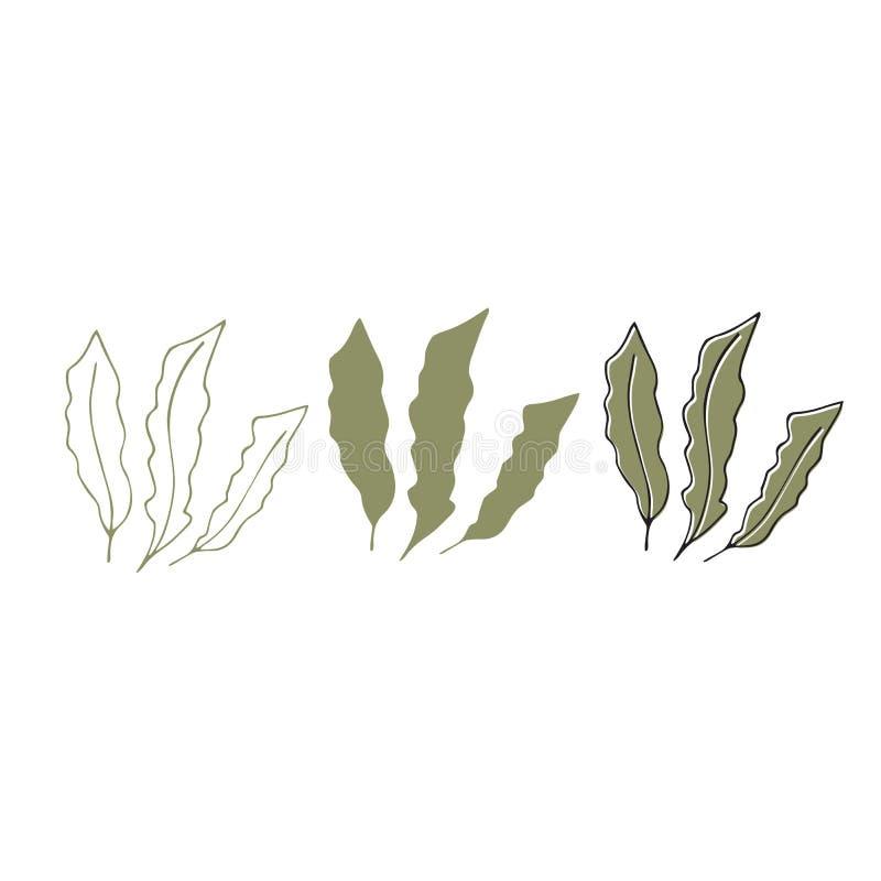 传染媒介手拉的海草 被隔绝的各自的对象,海藻 向量例证