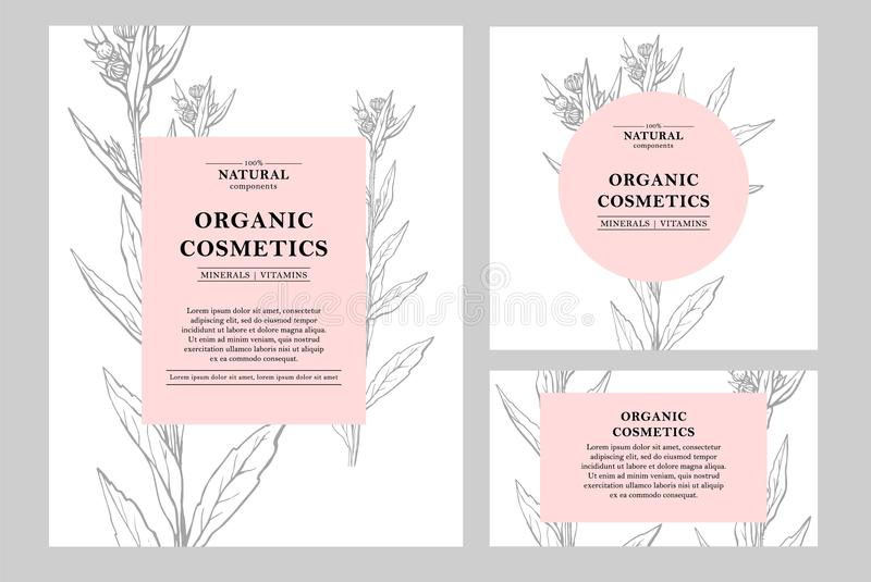 传染媒介手拉的花卉卡片和横幅 植物的手拉的例证 葡萄酒行家草本模板 自然 向量例证