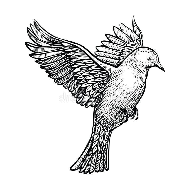 传染媒介手拉的飞行的鸽子 白色鸠剪影  库存例证