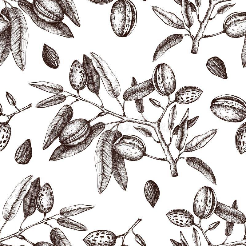 传染媒介杏仁背景 手拉的坚果树剪影 无缝植物的模式 葡萄酒补剂植物图画 库存例证