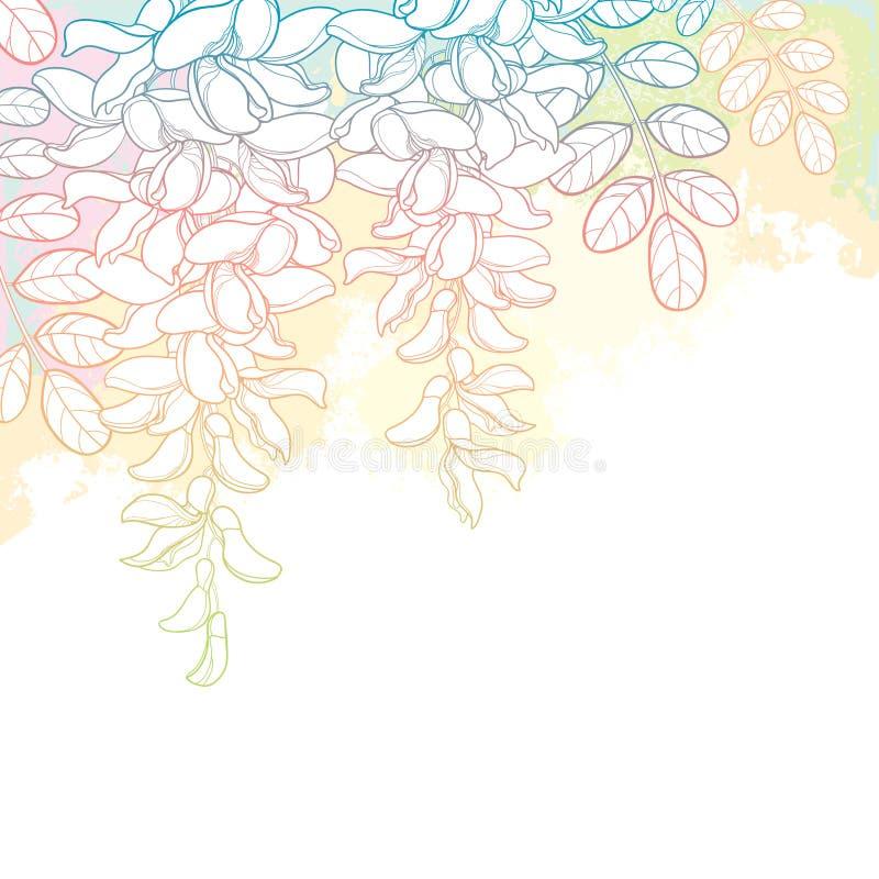传染媒介束概述白色错误金合欢或黑蝗虫或者刺槐属花、芽和叶子在粉红彩笔和白色 向量例证