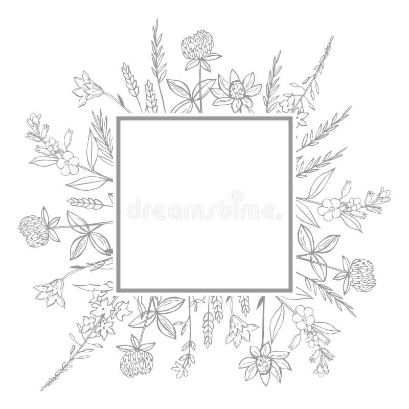传染媒介框架用手拉的狂放的草本和花 向量例证