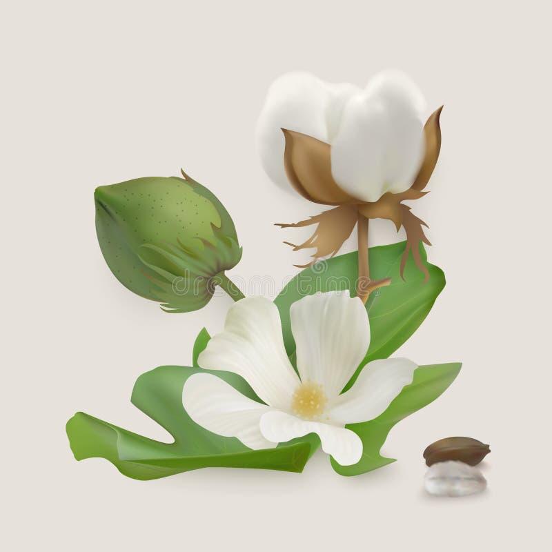 传染媒介棉花阶段 向量例证
