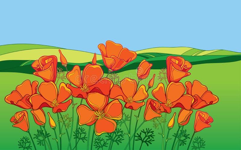 传染媒介概述橙色花菱草花或加利福尼亚阳光或者Eschscholzia、叶子和芽在背景与领域 皇族释放例证
