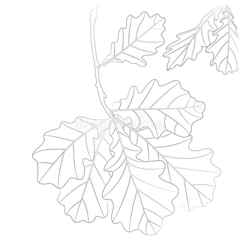 传染媒介橡木叶子的等高例证彩图的 皇族释放例证