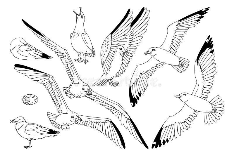 传染媒介海鸥海鸥集合 向量例证