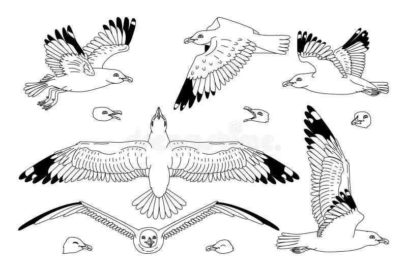 传染媒介海鸥海鸥集合 皇族释放例证