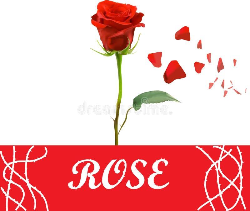 传染媒介现实红色玫瑰 向量例证