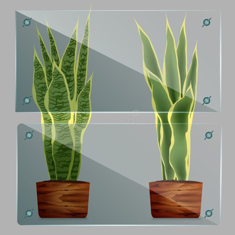 传染媒介玻璃框架 隔绝在透明背景 皇族释放例证