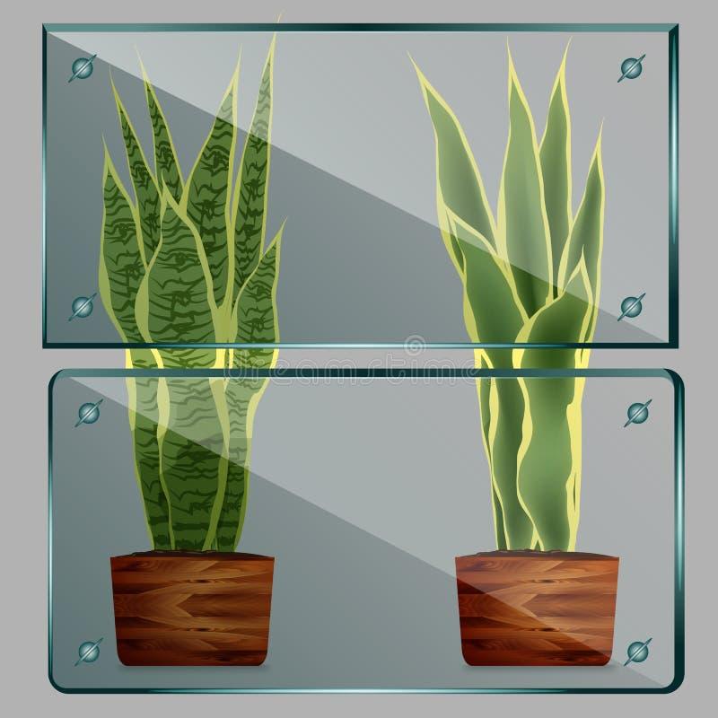 传染媒介玻璃框架 隔绝在透明背景 库存例证