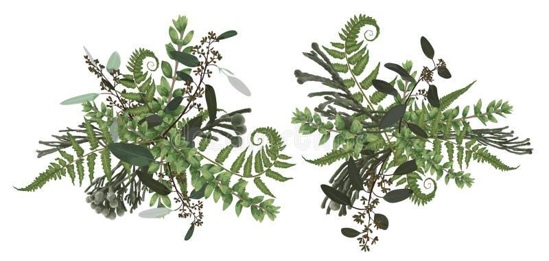 传染媒介百花香设计集合,绿色森林叶子,brunia,蕨,分支黄杨木潜叶虫,黄杨属,玉树 水彩样式,草本 库存例证