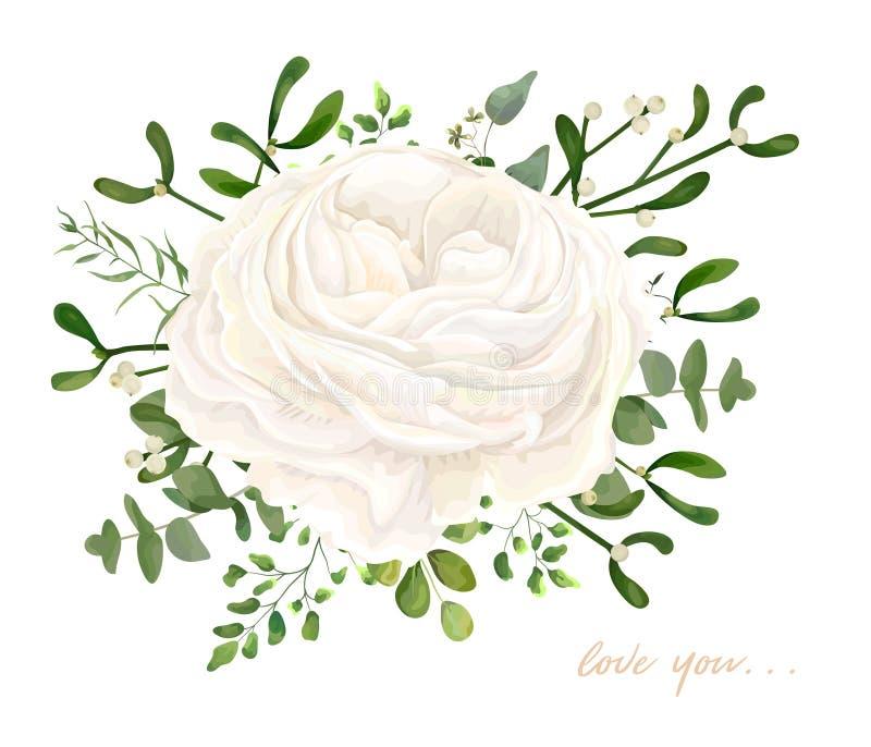 传染媒介百花香设计:庭院白色乳脂状的毛茛属Ros 皇族释放例证