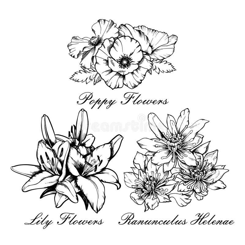 传染媒介花花束集合鸦片,百合,毛茛属helenae 手拉的墨水例证 向量例证