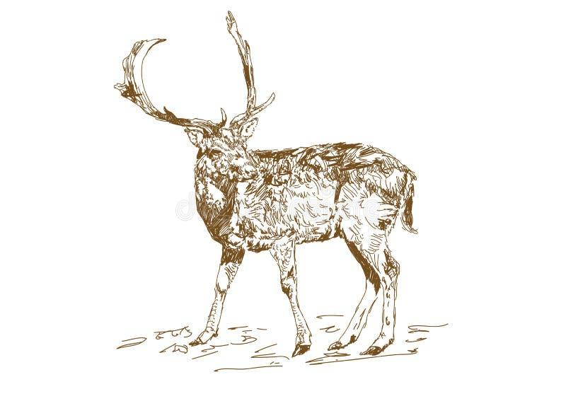 传染媒介葡萄酒样式被刻记的手拉的鹿动物狩猎期 与多枝垫铁的森林鹿在剪影样式 皇族释放例证