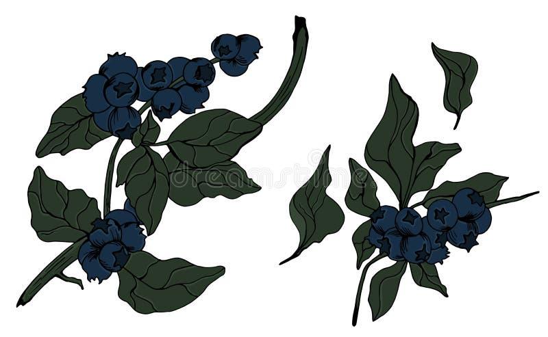 传染媒介蓝莓被刻记的艺术 向量例证