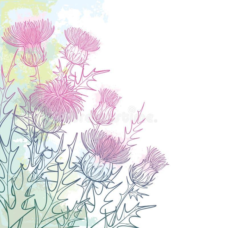 传染媒介角落束概述蓟或Carduus植物、多刺的叶子、芽和花在粉红彩笔和绿色在白色 向量例证