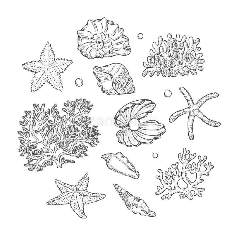 传染媒介集合海轰击星珊瑚和珍珠不同的形状 蛤壳状机件海星珊瑚虫单色黑概述 库存例证