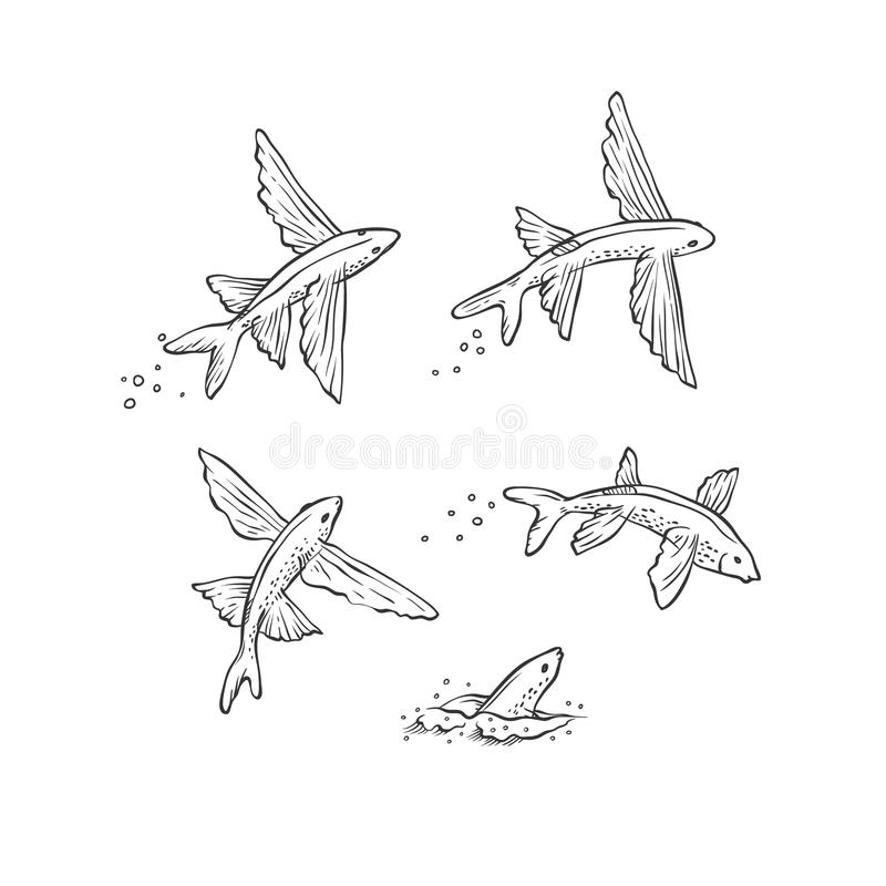 传染媒介集合飞鱼跳跃的下潜和游泳 在白色背景隔绝的单色黑剪影海洋动物为 库存例证