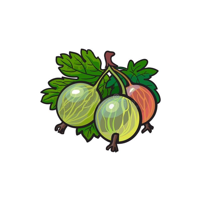 传染媒介鹅莓手拉的成熟莓果束 向量例证