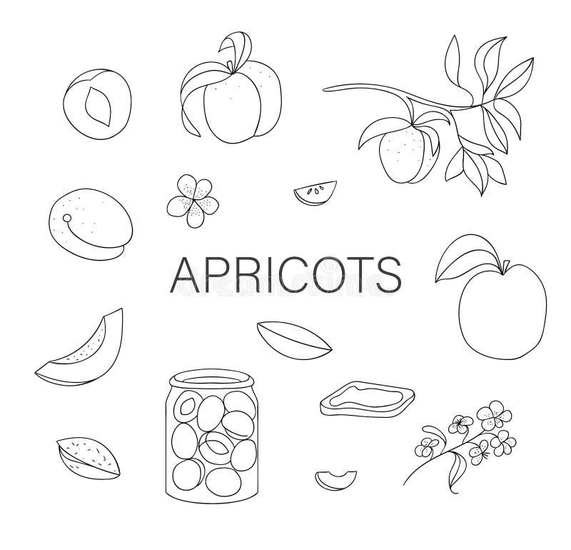 传染媒介黑白套逗人喜爱的手拉的杏子,花,果酱瓶子 库存例证