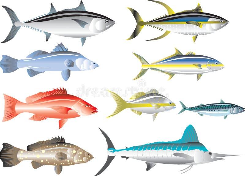 传染媒介-海鱼、金枪鱼、攫夺者、鲭鱼、石斑鱼、细索、Barramundi和琥珀鱼 向量例证