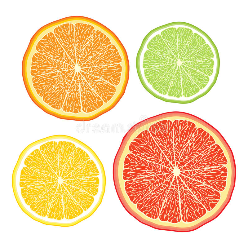 传染媒介传统化了桔子,柠檬,葡萄柚,石灰  库存例证
