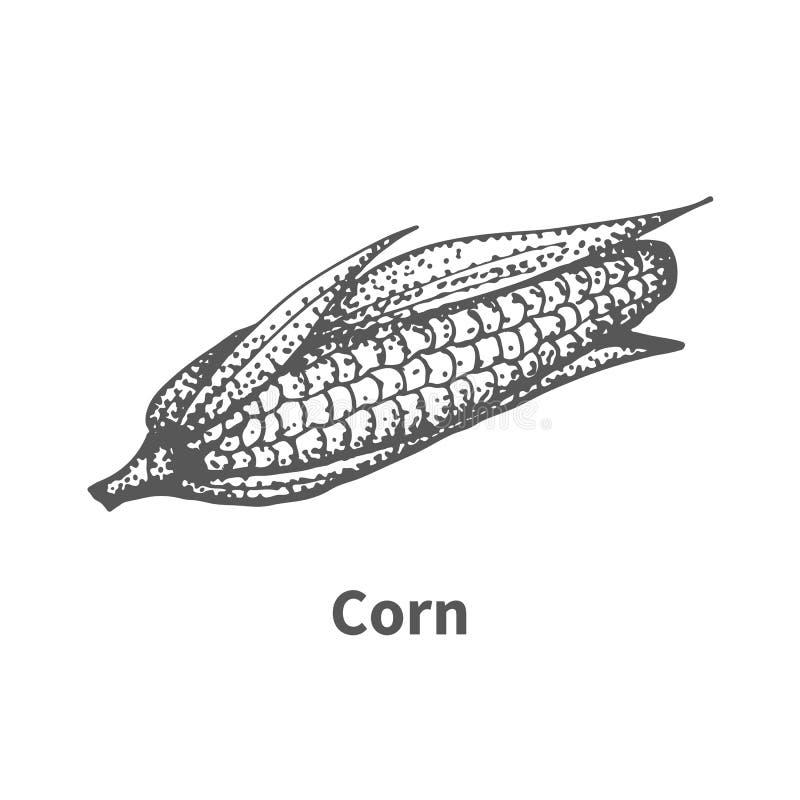 传染媒介例证手拉的玉米 库存例证
