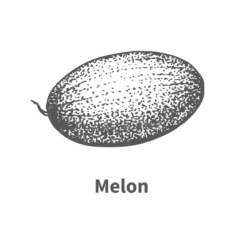 传染媒介例证手拉的瓜 向量例证