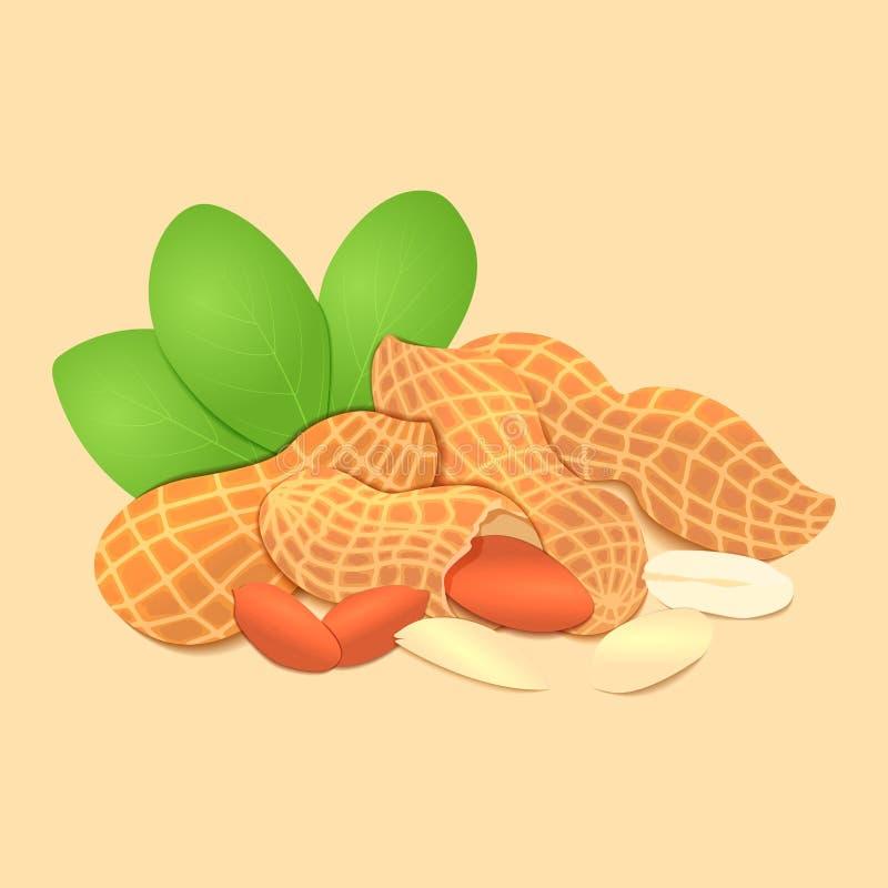 传染媒介例证花生坚果 几个被轰击的花生胡说在壳和,叶子 在米黄背景的鲜美图象 皇族释放例证