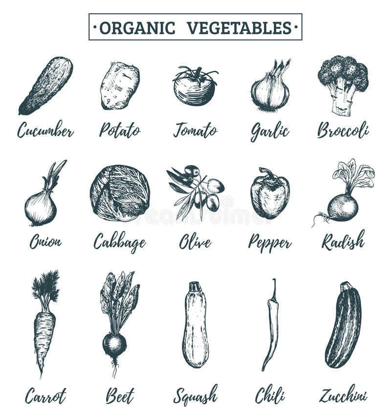 传染媒介农厂被设置的菜剪影 有机eco产品例证 标记,卡片的等手拉的绿色象 向量例证