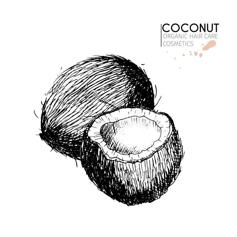 传染媒介套护发成份 有机手拉的元素 椰子 库存例证