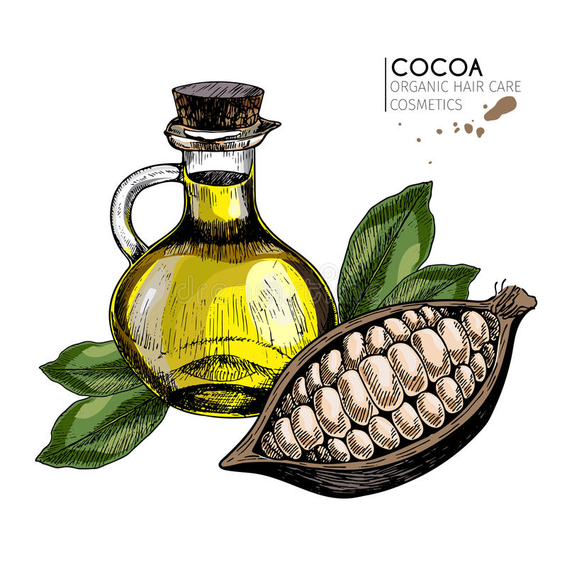 传染媒介套护发成份 有机手拉的色素 可可子和油瓶 库存例证