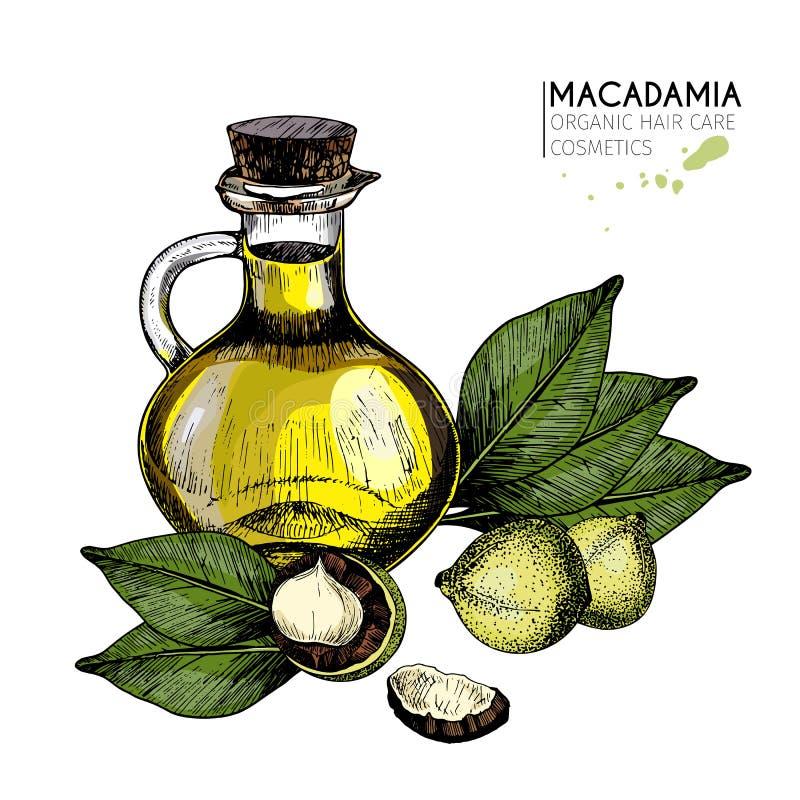 传染媒介套护发成份 有机手拉的色素 马卡达姆坚果和油瓶 皇族释放例证