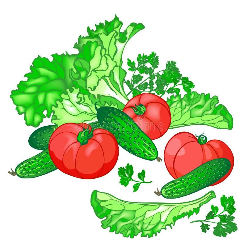 传染媒介套黄瓜沙拉的, tomat新鲜蔬菜 库存照片