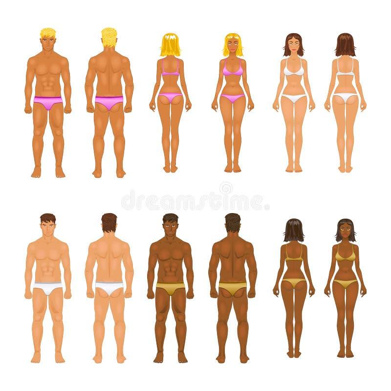 传染媒介少妇和人内衣的 机体 库存例证