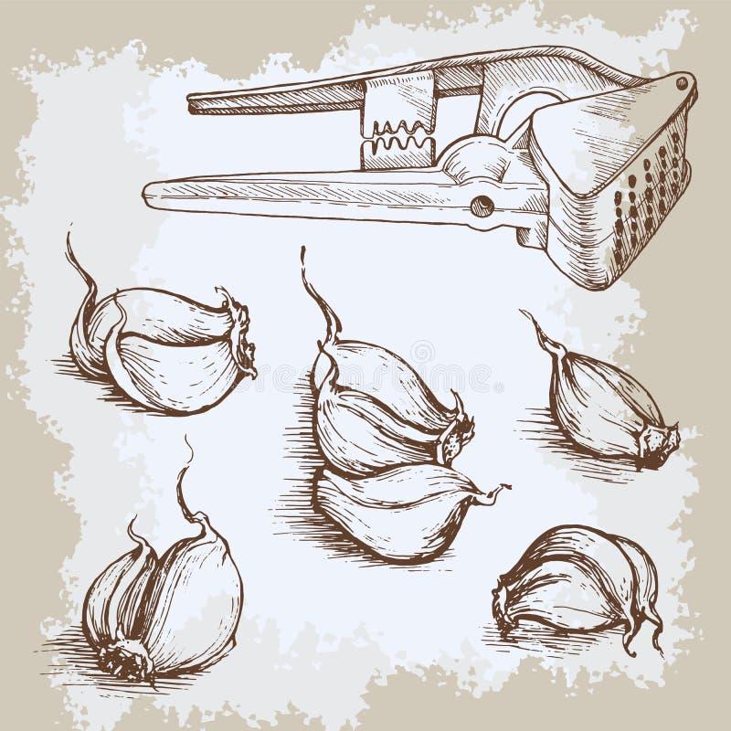 传染媒介手拉的大蒜集合 葡萄酒减速火箭的背景用速写的大蒜 厨房草本和香料例证 向量例证