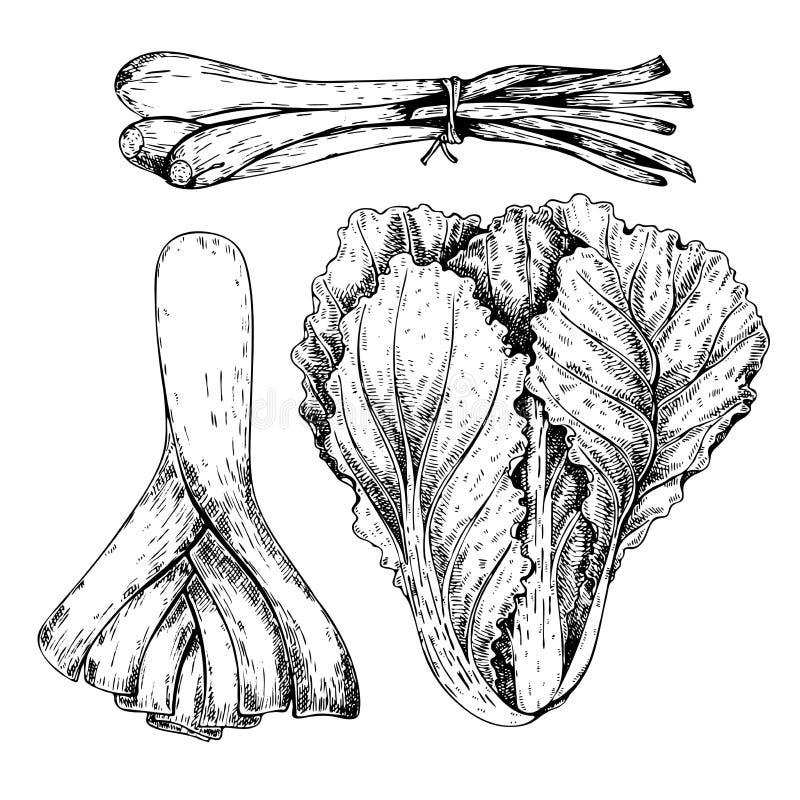 传染媒介手拉的套农厂菜 被隔绝的大白菜,韭葱,发芽葱