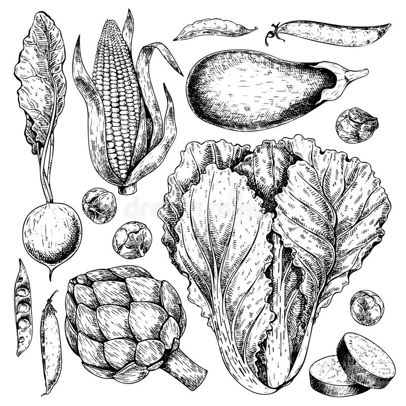 传染媒介手拉的套农厂菜 被隔绝的萝卜,朝鲜蓟,圆白菜,茄子,玉米,抱子甘蓝 刻记 皇族释放例证