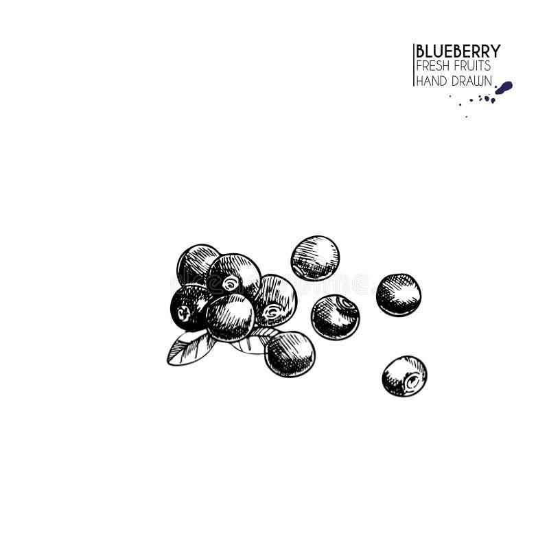 传染媒介手拉的套果子 查出的蓝莓 农厂收获被刻记的艺术 可口素食对象 库存例证