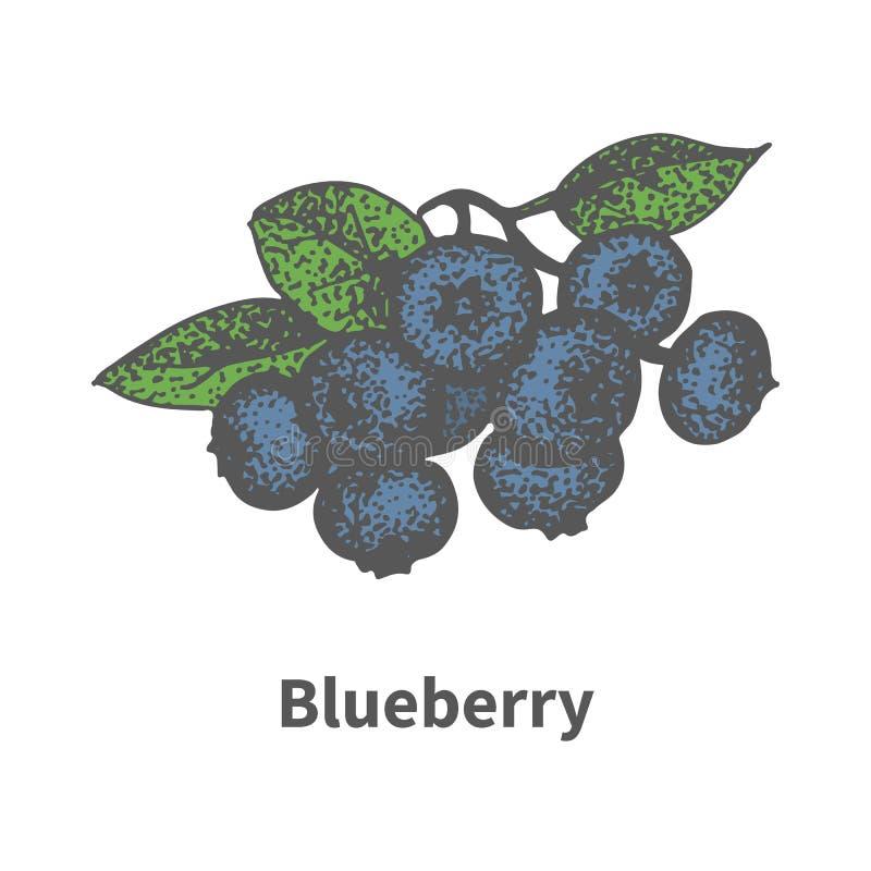 传染媒介手拉的束成熟蓝色蓝莓 向量例证